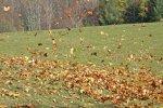 leaves swirling