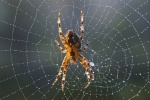 Wonder-120-Spider-Static-Image2